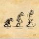"""Dessin représentant l'évolution de l'être humain. À gauche un singe (légende """"Primate""""), au milieu un homme préhistorique (légende """"Australopithèque""""), à droite un homme debout en érection (légende """"Homo erectus"""")"""